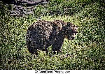 Grizzly Bear Near Hiking Trail