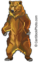 grizzly bear, ursus arctos horribilis, front view picture ...