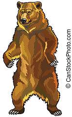 grizzly bear, ursus arctos horribilis, front view picture ...