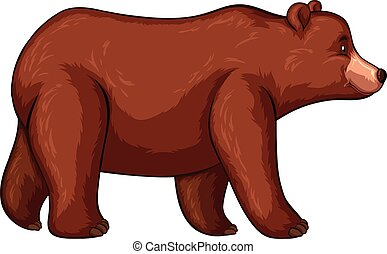 Grizzly bear walking on white background