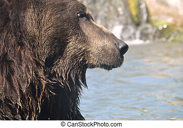 grizzly beer