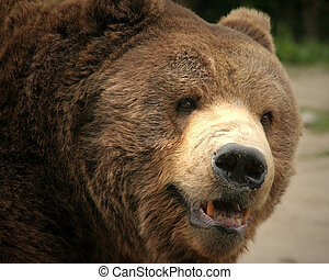 Grizzly