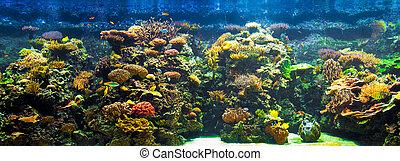 groß, aquarium, panorama