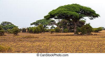 groß, bäume, landschaftsbild, safari, kenia