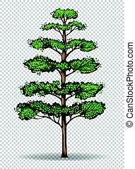 bonsai baum durchsichtig hintergrund bonsai baum hintergrund abbildung durchsichtig. Black Bedroom Furniture Sets. Home Design Ideas