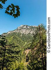 groß, berge, hoch, bäume, grün, felder, und, wälder