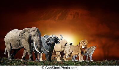 groß, einfassung kilimanjaro, fünf, hintergrund,...