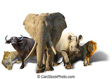 groß, fünf, freigestellt, afrikanisch