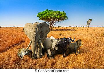 groß, fünf, safari