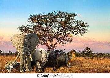 groß, fünf, sonnenuntergang, afrikanisch