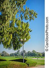 groß, grüner baum, und, laternenpfahl, park