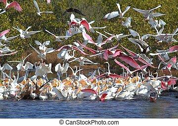 groß, herde, von, bewässern vögel, fütterung