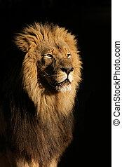 groß, löwe, mann, afrikanisch