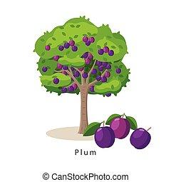 groß, lila, abbildung, infographic, früchte, elements., ihm...