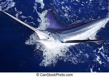 groß, marlin, spiel, atlantisch, fischerei, weißes, sport