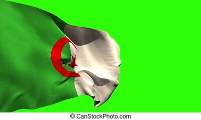 groß, national, blasen, fahne, algerien