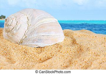 groß, setzen sand strand, schale, karibisch