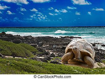 groß, turtle, an, der, meer, rand, hintergrund, von, a,...