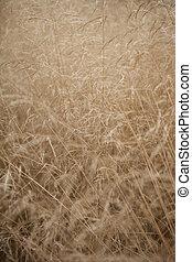 groß, wildes gras, in, spät, summer.