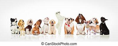 große gruppe, von, neugierig, hunden, und, hundebabys, oben schauen