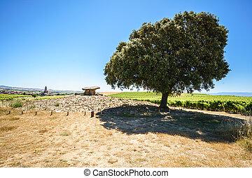 großer baum, neben, megalithic-gruft, auf, feld