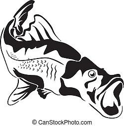 großer fisch, raubtier