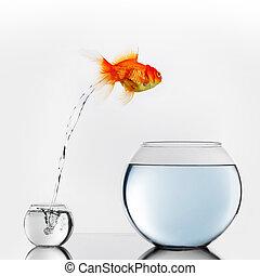 großer fisch, springende , fishbowl, gold