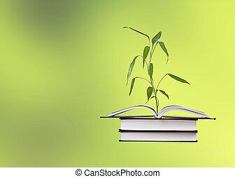 groeiende, bamboe, boek