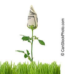 groeiende, geld, rose., handel concept, beeld