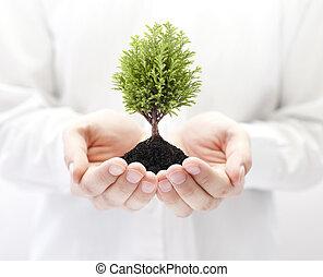 groeiende, groen boom, handen