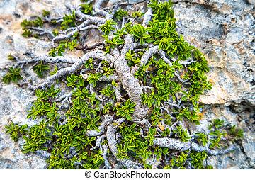 groeiende, groen boom, rots