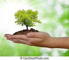 groeiende, hand, boompje