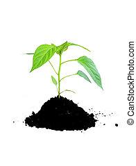 groeiende, plant, groene, en, terrein
