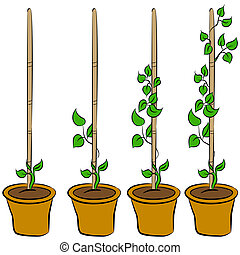 groeiende, plant, stadia