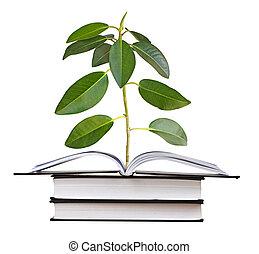 groeiende, sapling, boek