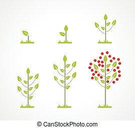 groeiende, set, boompje, pictogram