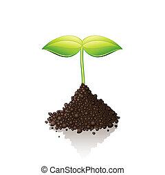 groeiende, spruit, vector, illustratie