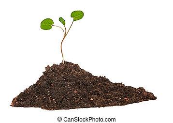 groeiende, stapel, muntjes, boompje