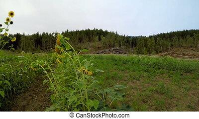groeiende, veldbloemen, 4k, fris