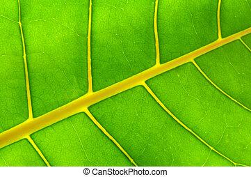 groen blad, achtergrond
