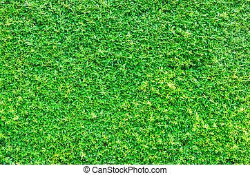 groen blad, achtergrond, textuur, natuur