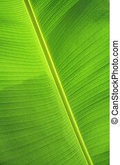 groen blad, banaan, textuur