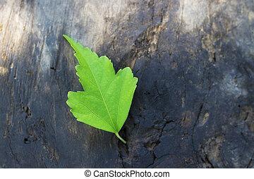 groen blad, in, rustiek, hout