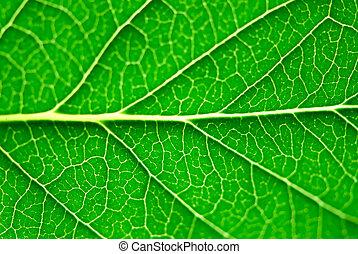 groen blad, macro