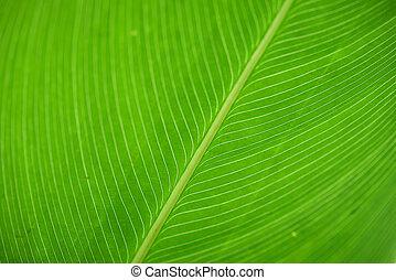 groen blad, macrophotography, textuur