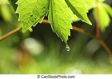 groen blad, met, waterdaling