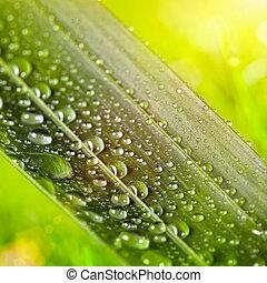 groen blad, met, waterdruppels, op, natuurlijke , zonnig, achtergrond