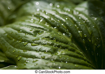 groen blad, nat