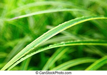 groen blad, op einde