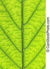 groen blad, textuur
